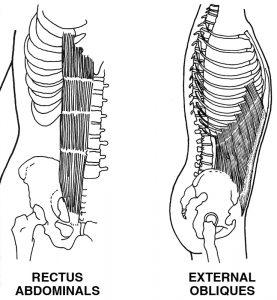 Rectus Abdominals and External Obliques