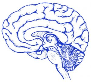 Blue line drawing of a brain