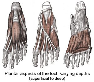 Plantar Aspects of Foot