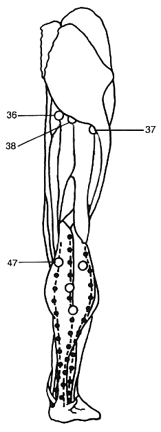 Trigger Points in the Calf Muscles